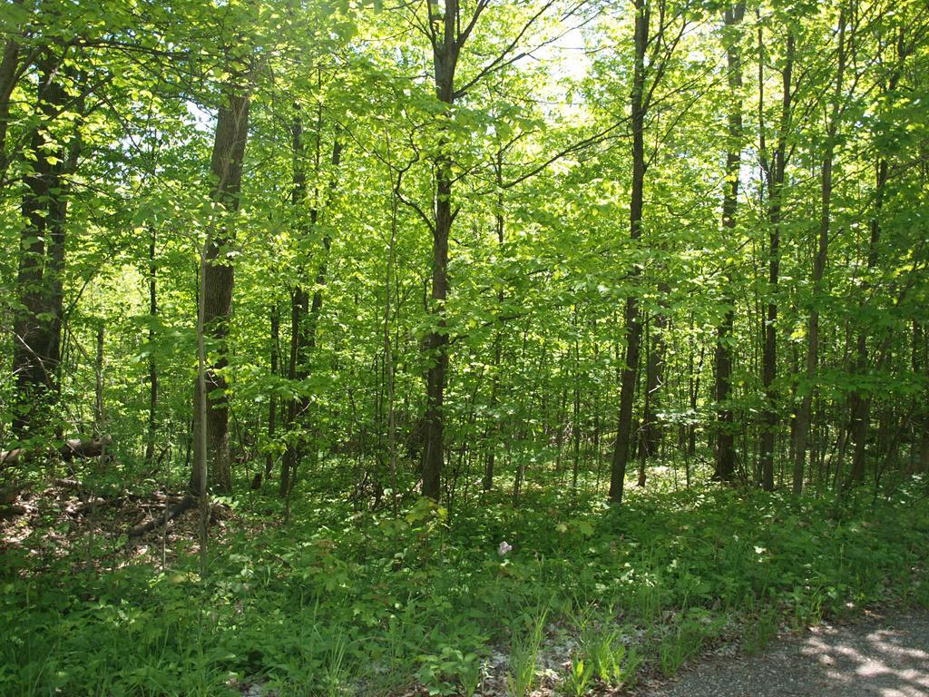 Pretty woods